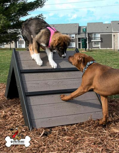 Mini Hill Climb - Gyms For Dogs - Agility Products (2)s
