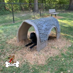 Hammie's Tunnel House